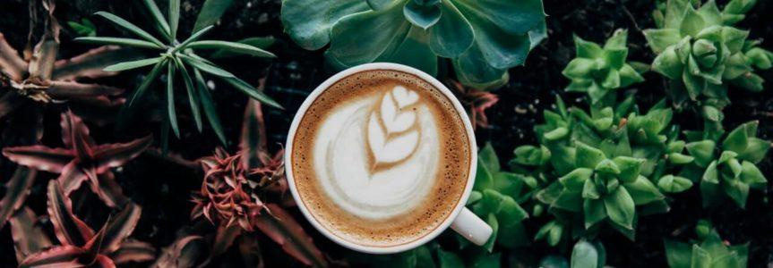 Káva vzáhrade? Vyskúšajte kávu do kvetov, ako hnojivo, či proti mravcom