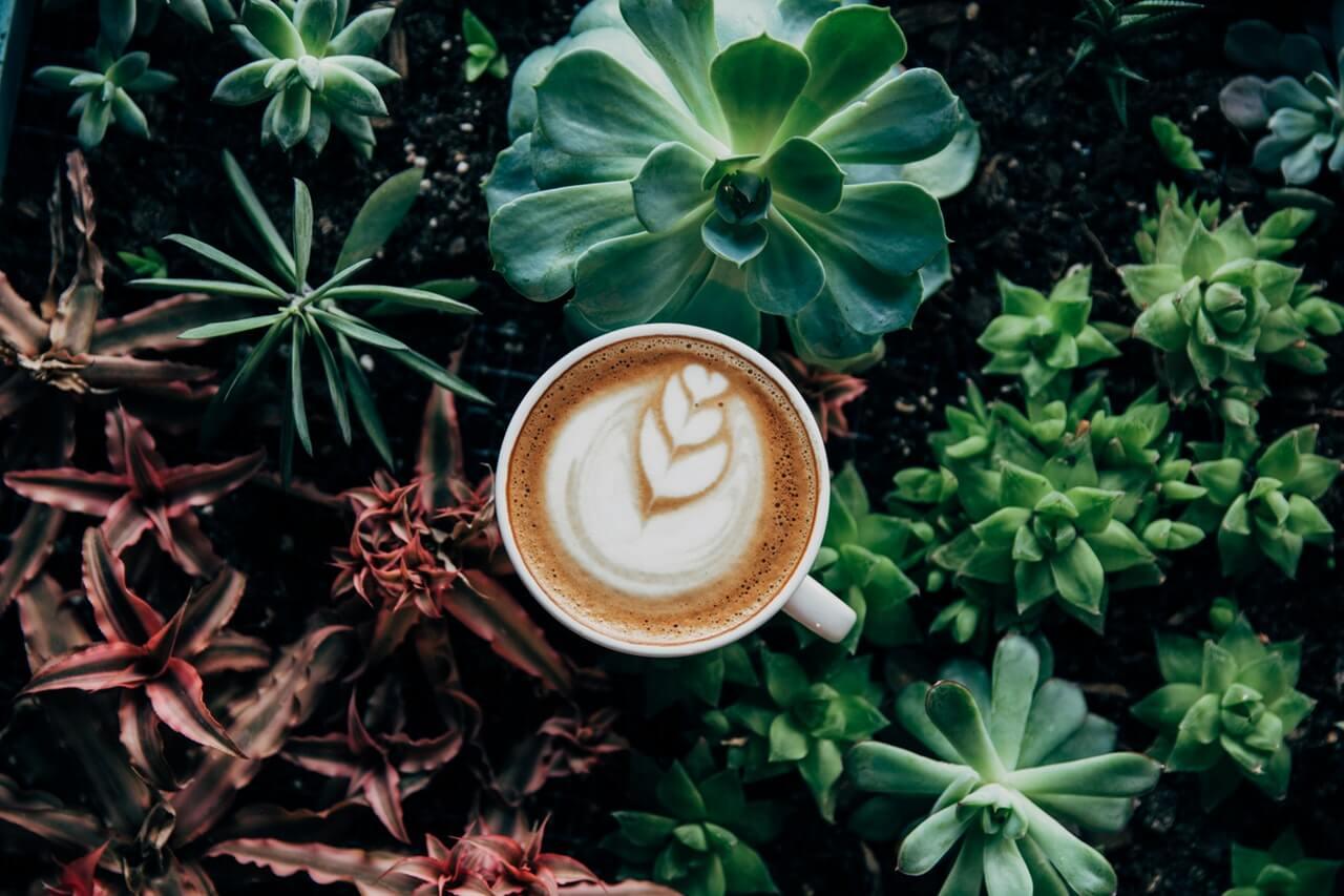 pouzitie kavy v zahrade
