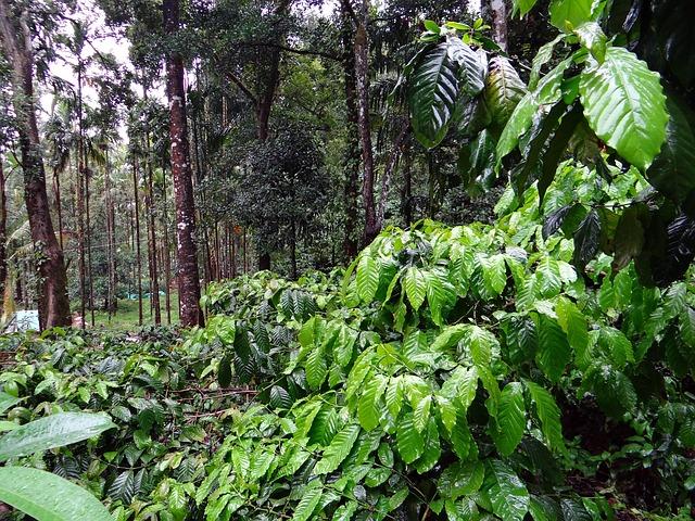 Zachráni raz organická káva naše životné prostredie?