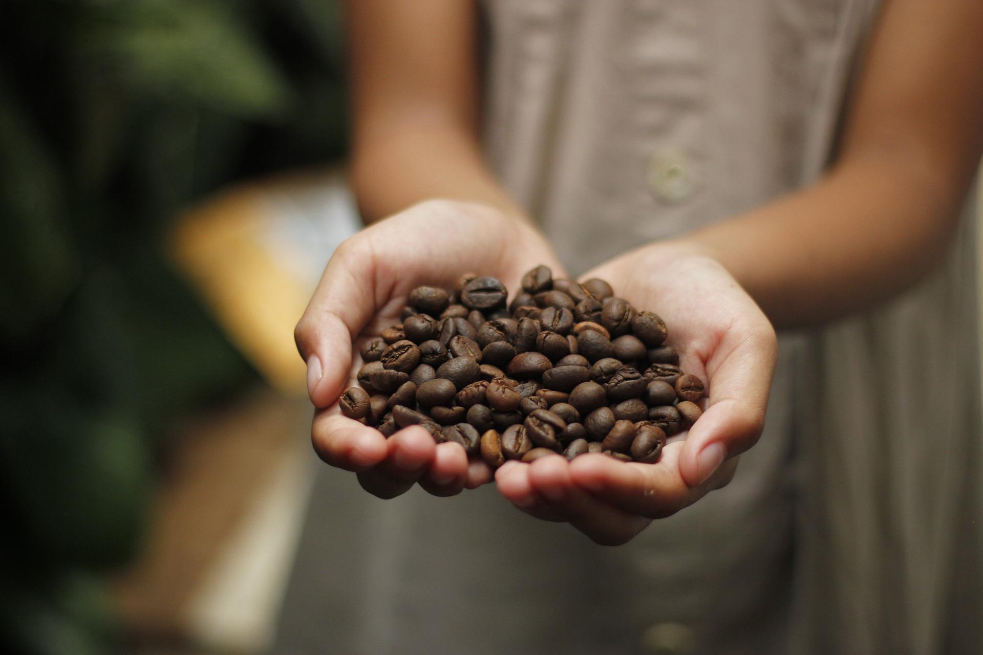 Zber kávy včasoch celosvetovej pandémie